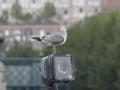 overvakning.jpg