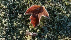 Löv men frost
