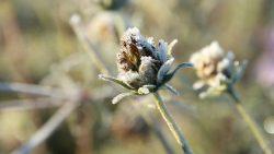 Fd blomma med frost